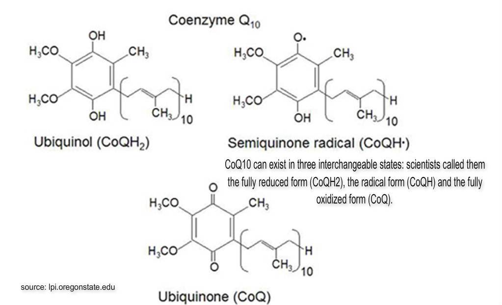 Is Ubiquinone Is It A Natural Ingredient For Skin Care